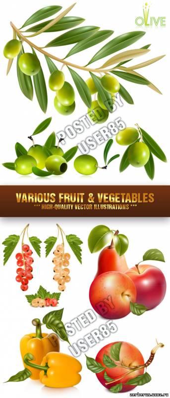 Stock Vector - Овощи и фрукты