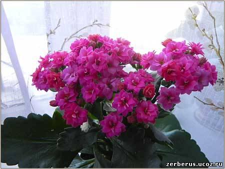 Цветы на подоконнике исправят настроение